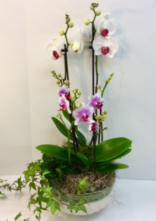 Double Orchid Garden