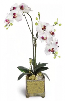 Double Orchid in glass