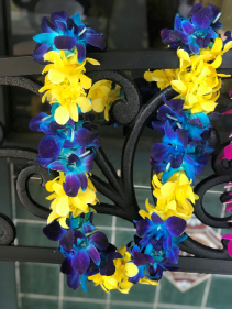 Double Orchid Lei- Blue and Yellow Graduation