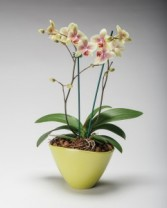 Double Orchid Planter Planted blooming plants
