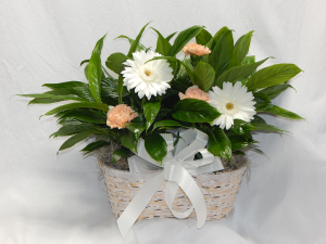 Double Peace Lily Plus Live Plants & Fresh Blooms in Norway, ME | Green Gardens Florist & Gift Shop