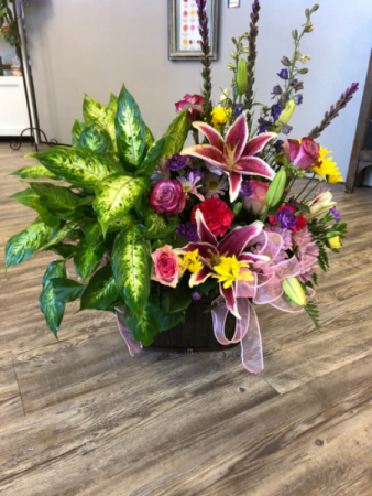 Double Plant and Fresh Basket