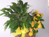 Double Plant Basket green and blooming plants