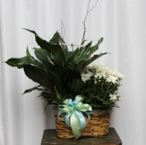 Double Plant Basket Plants in Kannapolis, NC | MIDWAY FLORIST OF KANNAPOLIS