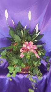 Double Plant Basket Plants