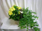 Double basket Plants