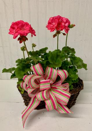 Double Plant Basket Special