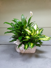 Double Planter Plant