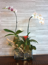 Double Potted Orchid Arrangement In Glass Vase