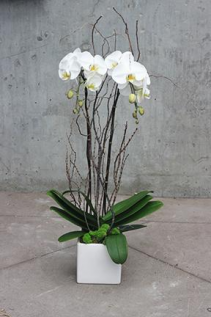 Double Stem White Orchid Planted Container