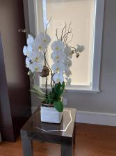 Double stems white orchids