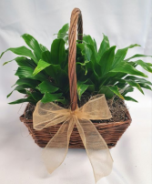 Double Tropical Plant  Basket
