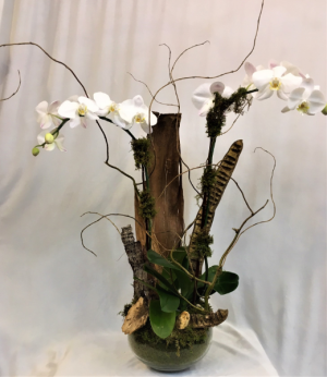 Double White  Orchid Plant in Boca Raton, FL   FLOWERS OF BOCA