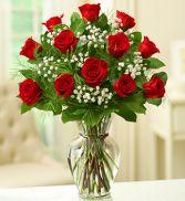 Dozen Long Stem Red Roses  Valentine's Day