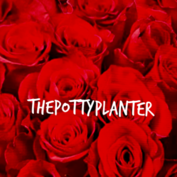 Dozen Long Stemmed Roses   To arrange in your own vase