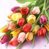 dozen mix tulips bouquet  cut flowers