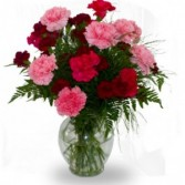 Dozen Mixed Carnations in Vase  MIxed colors,* may not look like pictured, you choose colors or we will
