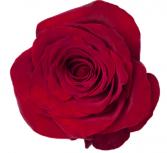 Dozen Red Roses Arrangement