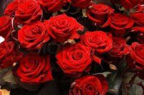 Dozen Red Roses Wrapped Fresh Cut