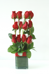 Dozen Roses in a row Container Arrangement
