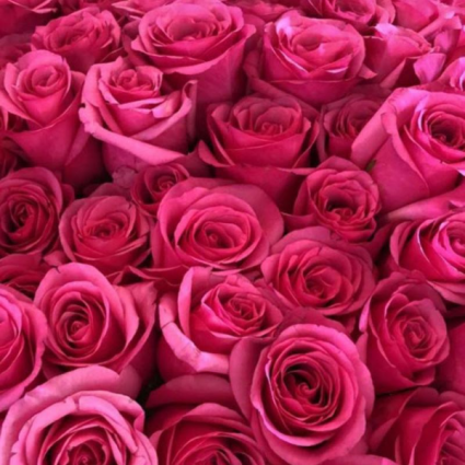 Dozen Showstopper Pink Floyd Roses Cut bouquet or arranged in a vase