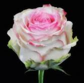 Dozen Sweet Candy Roses Arranged in a Vase