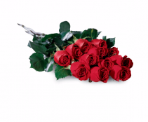 Dozen Wrapped Red Roses Rose's with no filler to lots... you choose