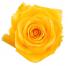 Dozen Yellow Roses Arrangement