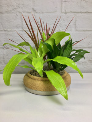 Dracaena Triplet  Dishgarden  in South Milwaukee, WI | PARKWAY FLORAL INC.