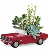 Dream Wheels '65 Ford Mustang by Teleflora  Succulent Arrangement