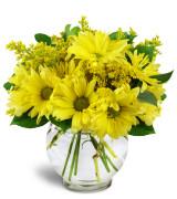 Dreamy daisies - 1379 Vase arrangement