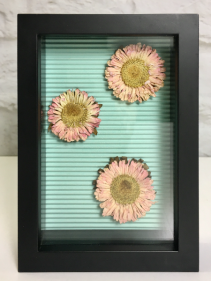 Dried Aster Blooms  Shadow Box