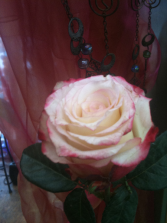 Cut-off for ordering-both online & phone 02/10/21 Valentine's Day Roses- hand-tie Bouquet & vase arrangements
