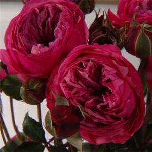 Floral Subscription Program Fresh Flowers