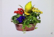 EARTH ELEMENTS Plants