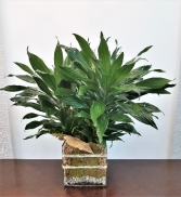 Earthly Green Decorative Plant
