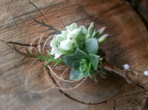 EARTHY BOUTONNIERE