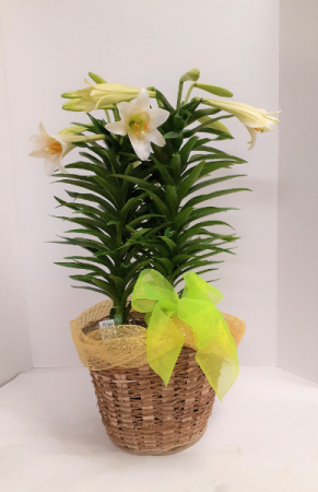 Easter Lily 2021  in Tottenham, ON | TOTTENHAM FLOWERS & GIFTS