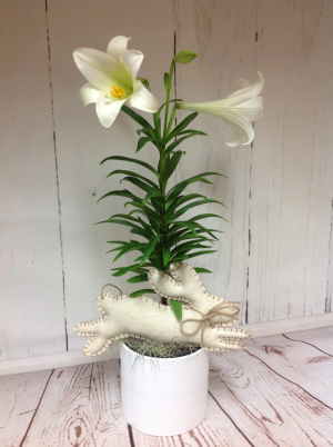 Easter Lily  in Easton, CT | Felicia's Fleurs