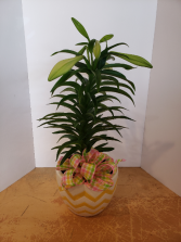 Easter lily in ceramic pot Plant