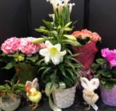 Easter Plant Selection Plants range from $11.99- $39.99