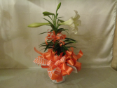 Easter Gift Lily Plant