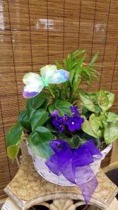 Easy Grower Basket Garden