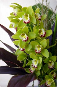 Tropical Cymbidium Vase Arrangement