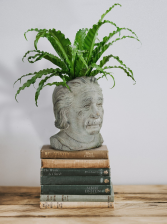 """Einstein Planter holds 4"""" plant"""