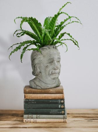 Einstein Planter holds 4