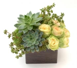 Elegant Complement Design Flower and Succulent Arrangement in Los Angeles, CA | MY BELLA FLOWER