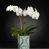 Elegant Impressions™ Luxury Orchid