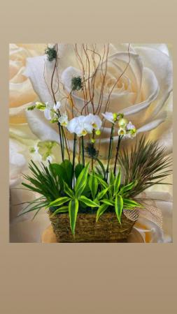 elegant orchid basket  canasta orquidea elegante