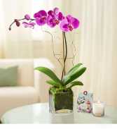 Elegant Orchid Blooming Plant
